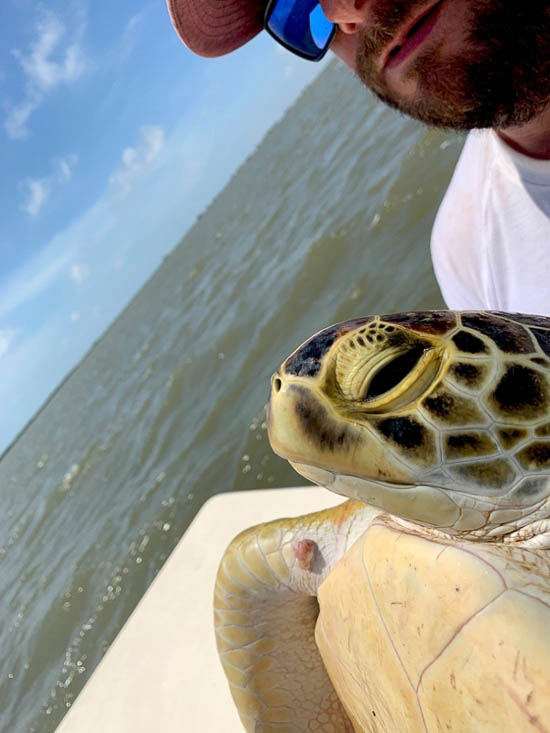 A member of the Gulf Center for Sea Turtle Research poses with a turtle