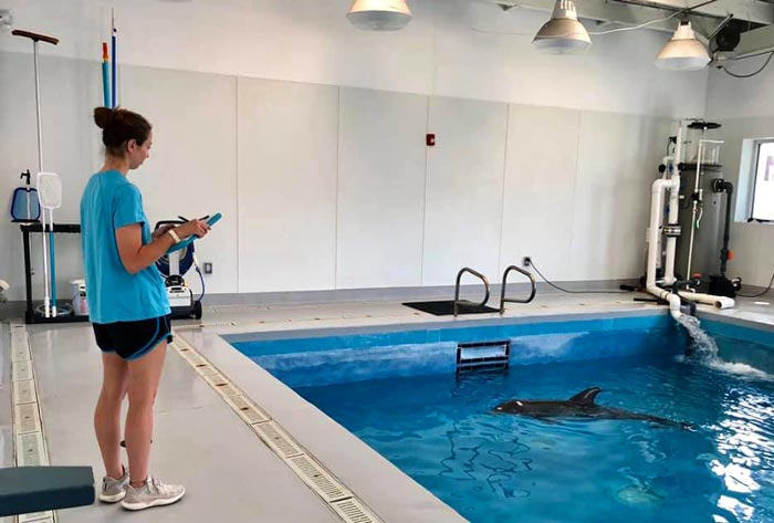 Clare Shea '20 observes a dolphin in the care of TMMSN during her internship with the organization.